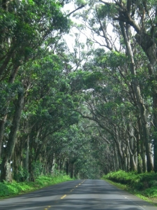 tunnel-of-trees-1368129-m