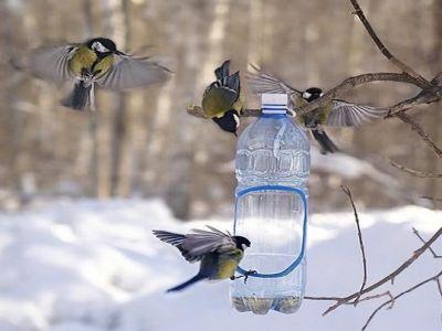 madár