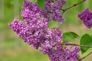 Milyen virágot milyen alkalomra érdemes vinni?