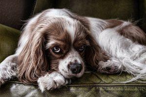 Bravecto tabletta kutyáknak hol kapható?