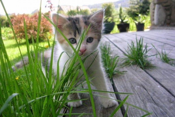 little-cat-1409488-640x480